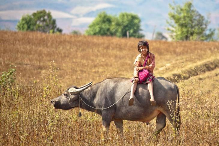 nena sobre bufala