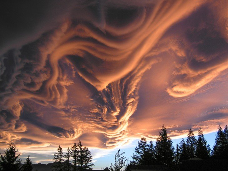 Mezcla de nubes en el cielo y la punta de unos pinos