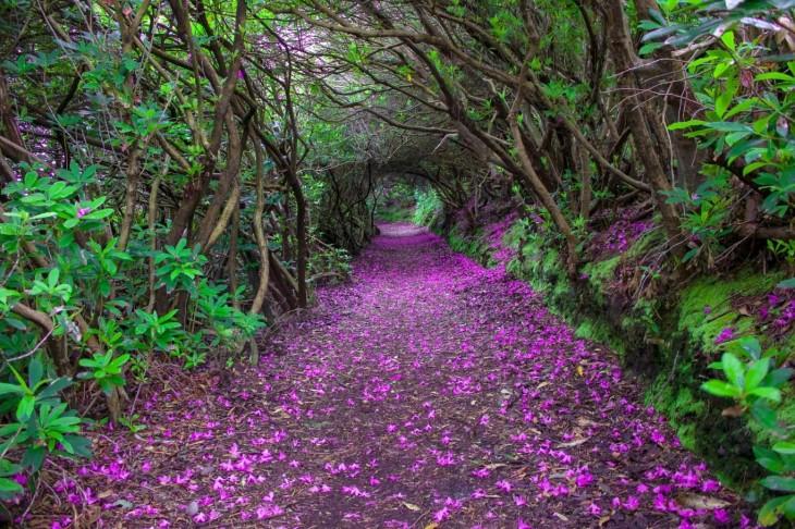 NguyenBinhVTV-141419041438-Reenagross_Ireland