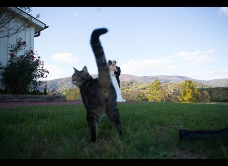 un gato atravesándose en medio de una fotografía de una pareja