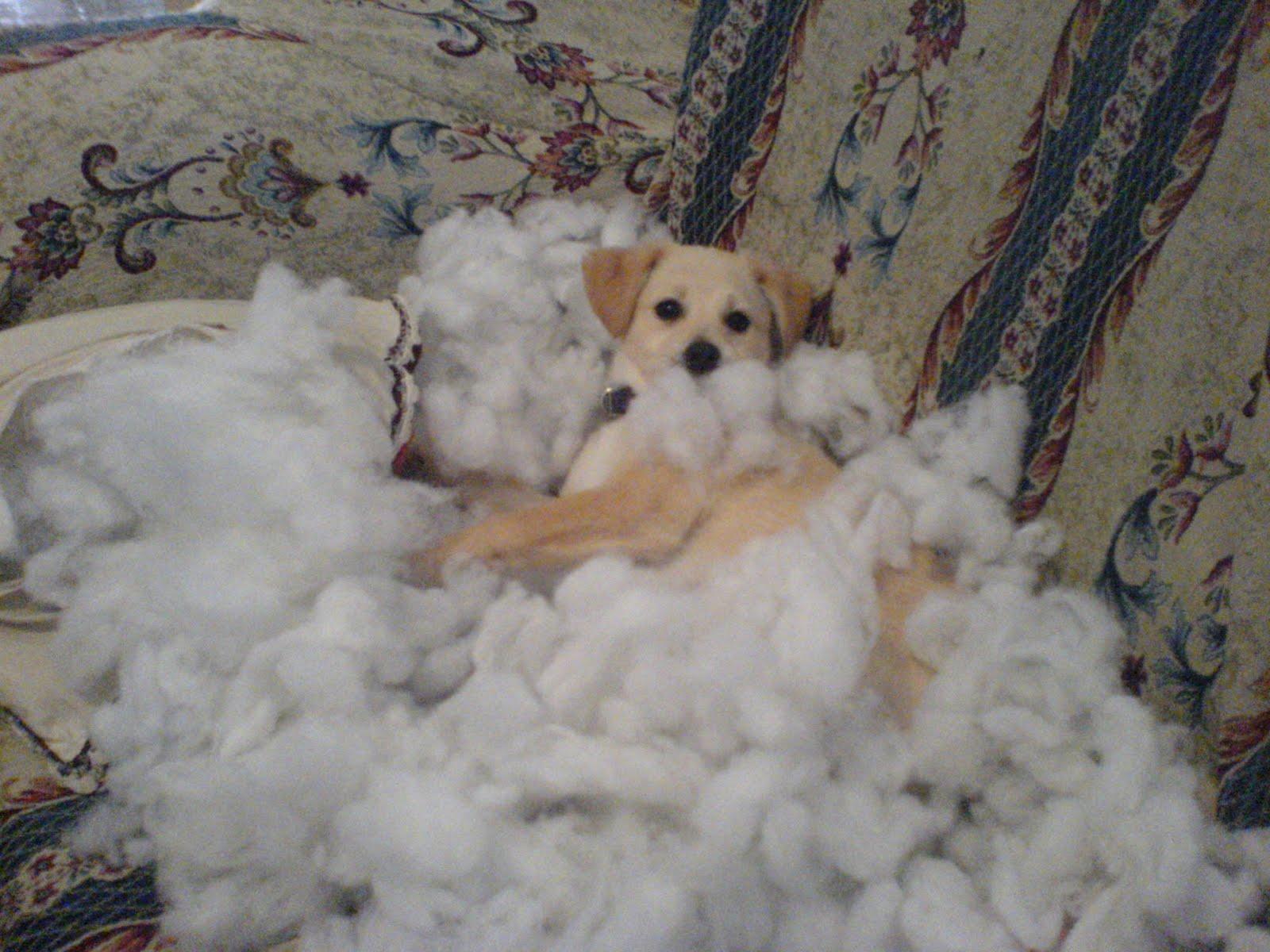 Perros Que Hicieron Desastres Pero Aparentan No Hacer Nada