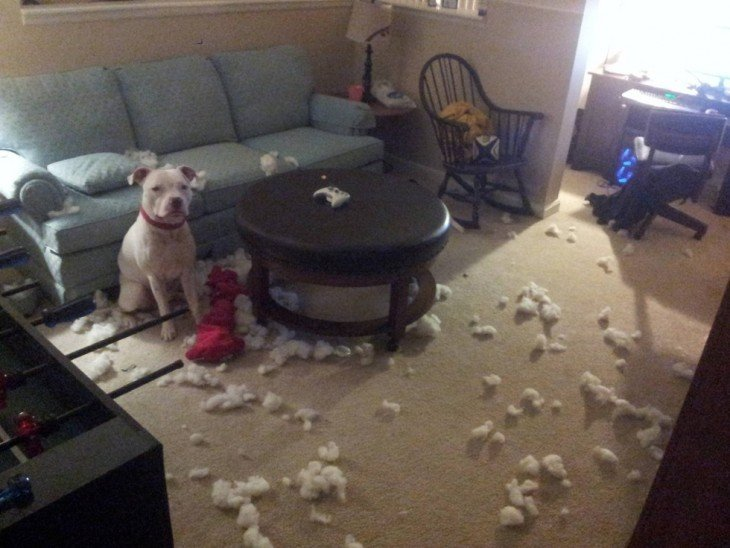 un perro bull terrier sentado en una sala con mucho desastre a su alrededor