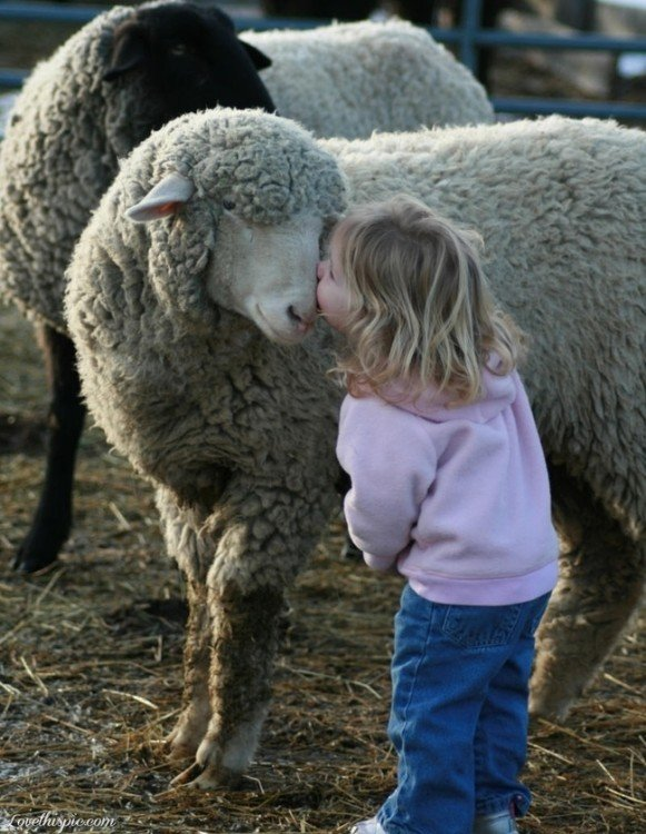 niña besando oveja