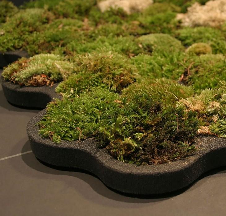 напольные растения