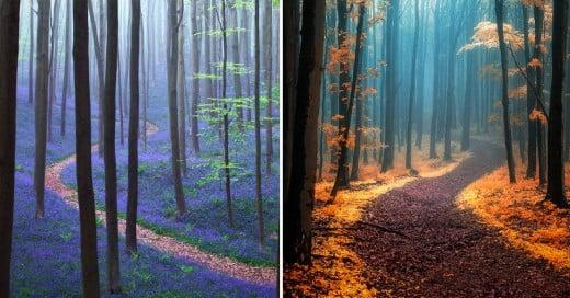 caminos magicos que te ruegan por ser recorridos