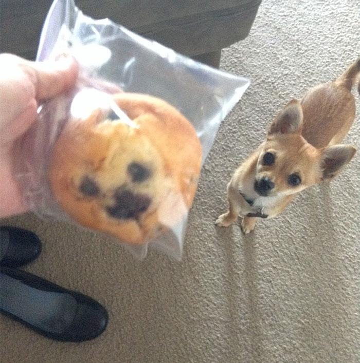 galleta en forma de cara de chihuhua