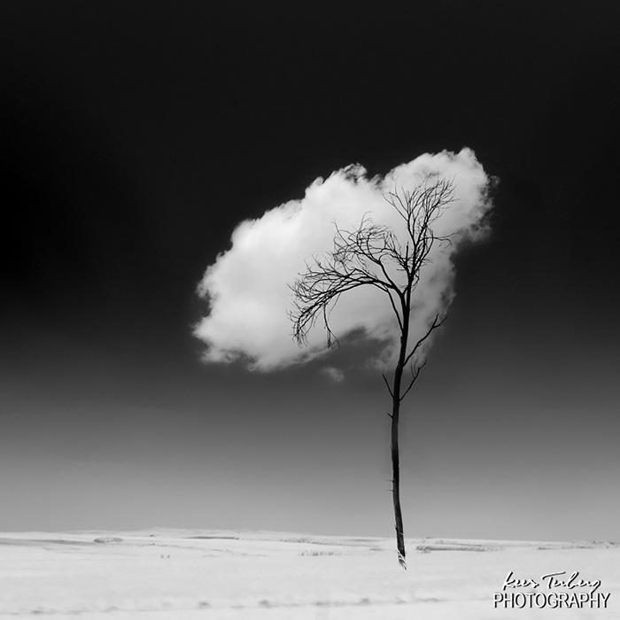 follaje de un árbol