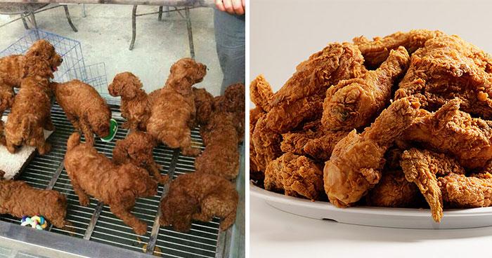 cachorros con comida rostizada