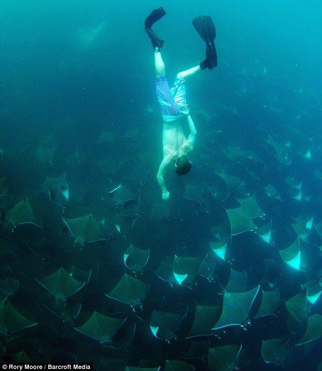 buzo nadando junto a mantarrayas