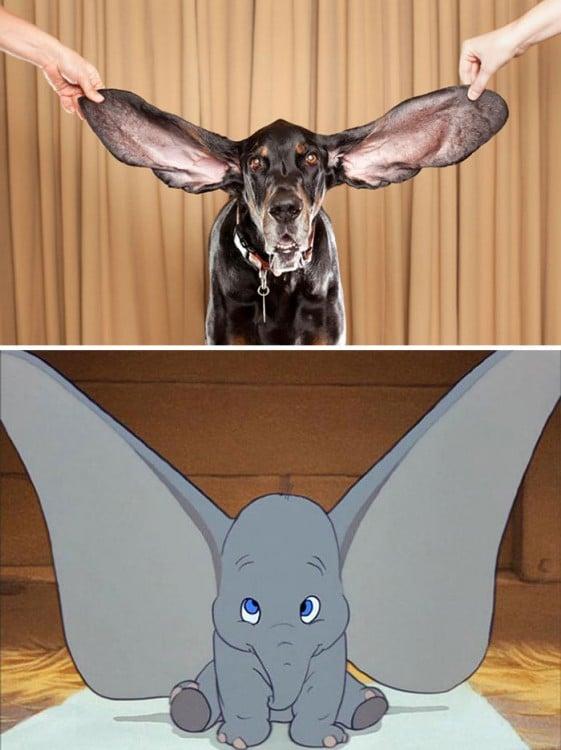 orejas de dumbo