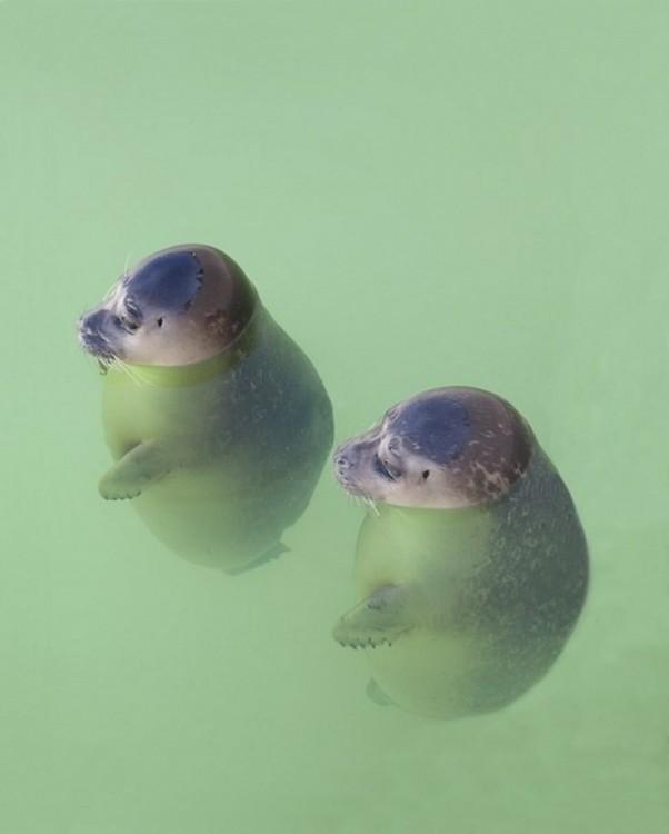 dos focas pequeñas