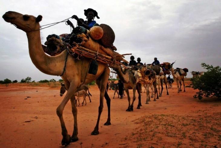 pasear en camello