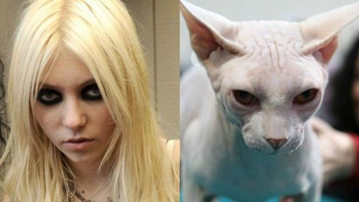 gato arabe y mujer enojados