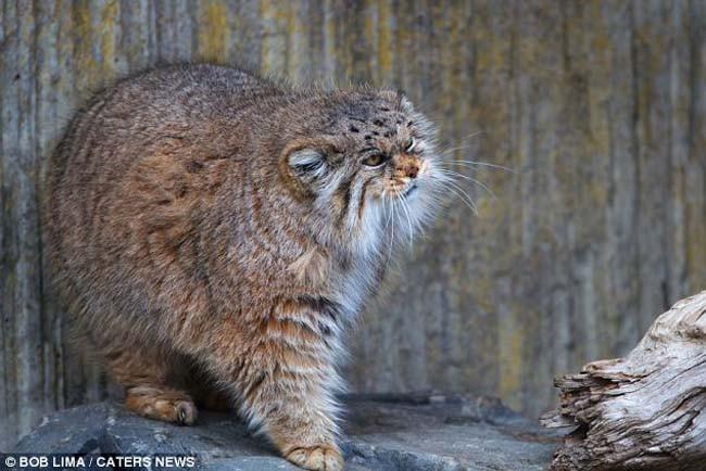 Animales Exóticos Que Se Encuentran En Peligro De Extinción