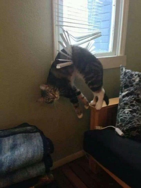 gato sin suerte 5
