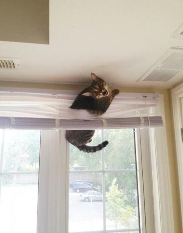 gato sin suerte 6