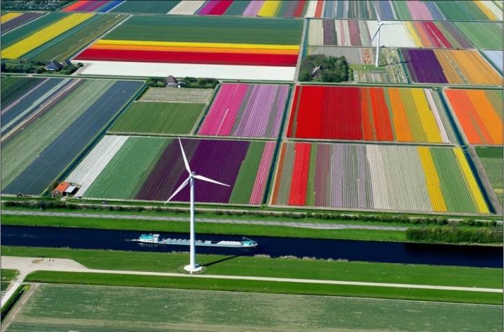 Camino de tulipanes en holanda
