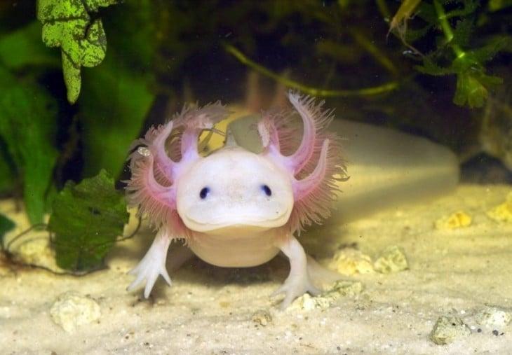 animal acuático