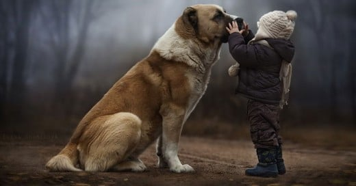 lecciones de vida que nos dan los perros