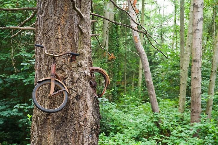 bicicltea incrustada en un arbol