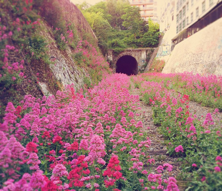 tunel de tren lleno de vegetacion