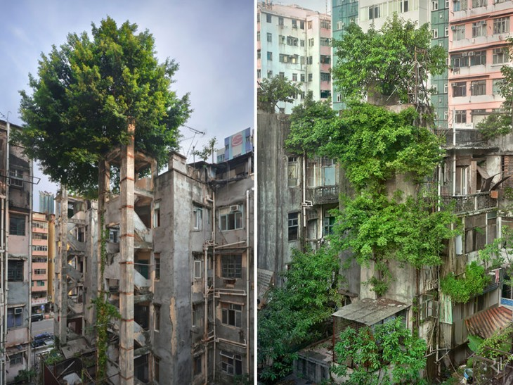edificios comidos por la vegetacion