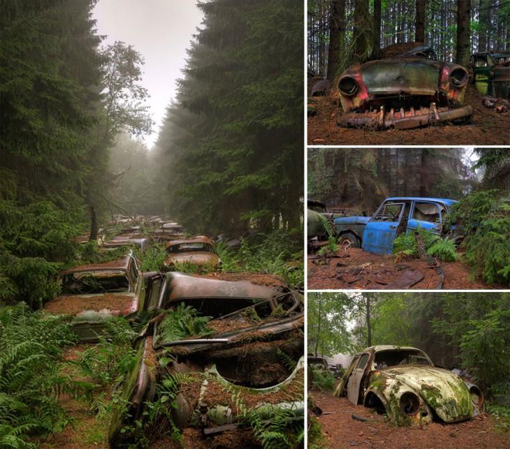 autos en un bosque abandonados