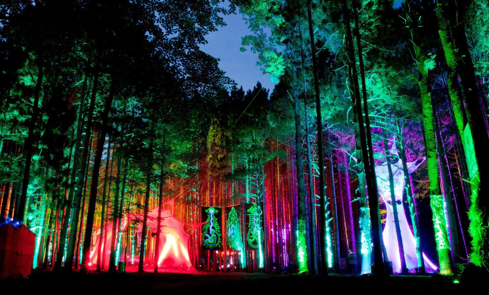 Polvo en el bosque 2 - 1 4