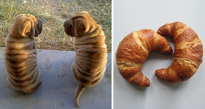 sharpei y cuernito