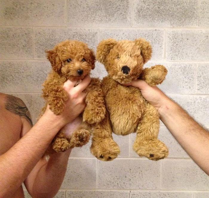 cachorro con osito de peluche