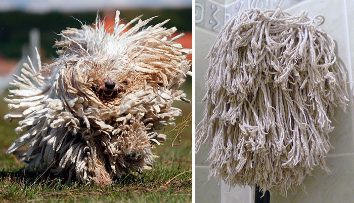 Dog That Looks Like A Towel 20 Animales que tienen...