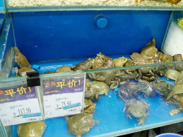 tortugas y ranas