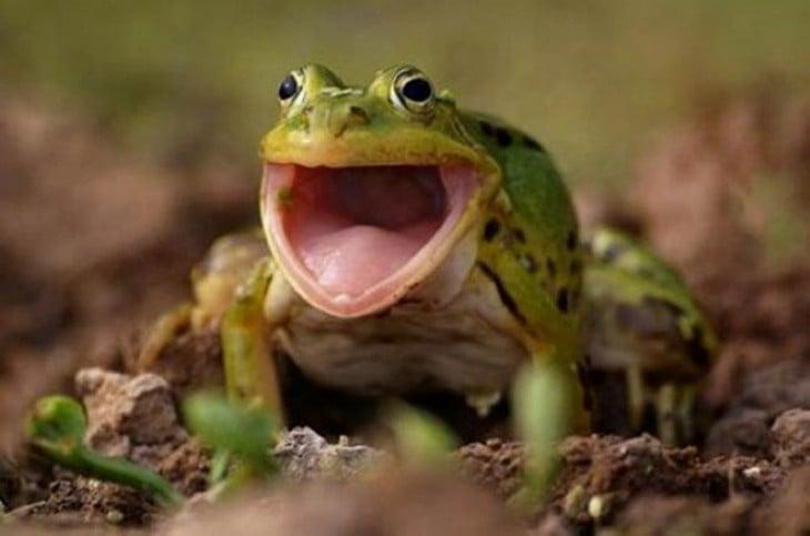 rana con la boca abierta
