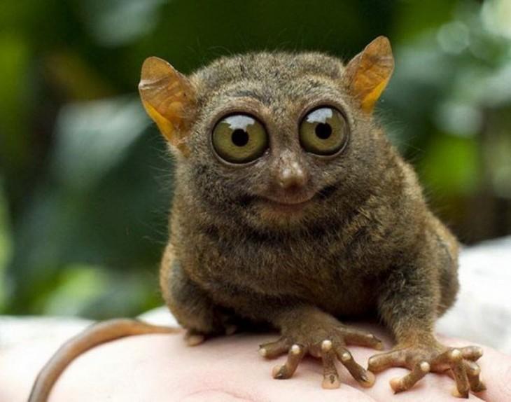animal de ojos saltones