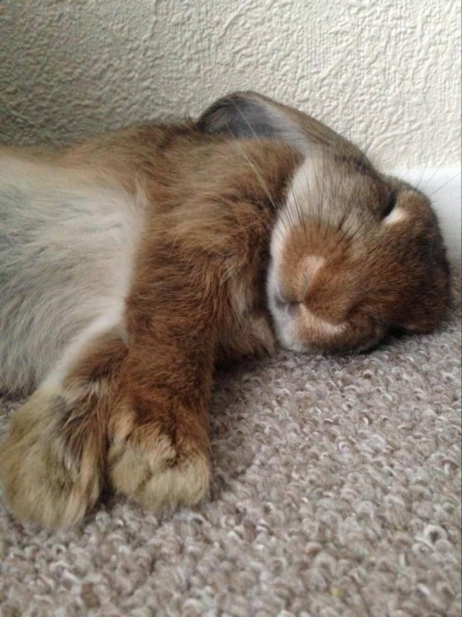 35 Animales Tan Cansados Que Duermen En Cualquier Parte