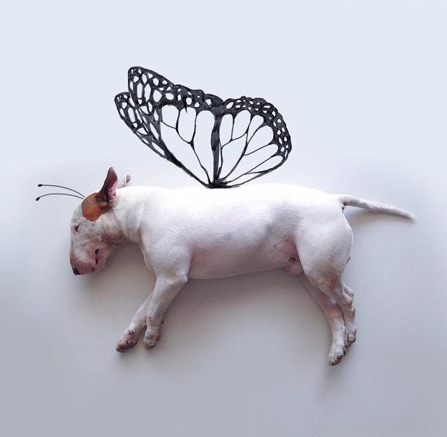 choo es una mariposa