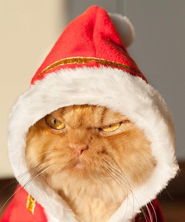 gato con sombrero de navidad
