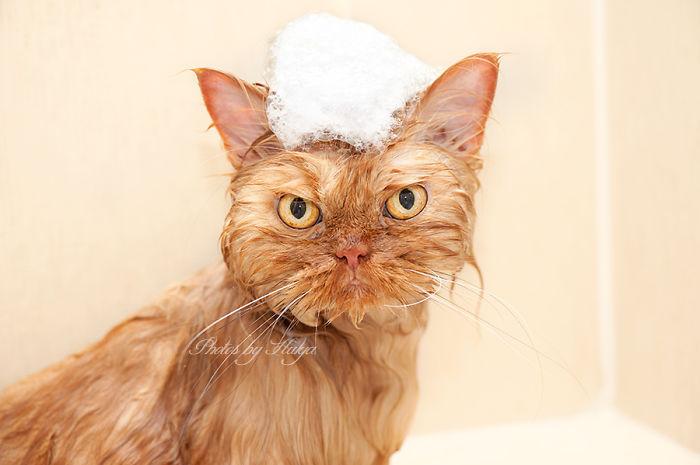 gato en un bano