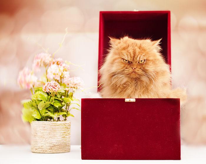 gato adentro de una caja roja