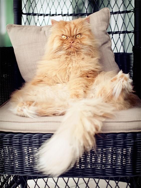 gato en una cama sentado