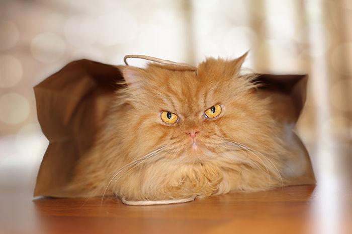 gato acostado con cara ma;a