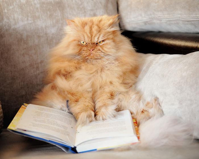 gato leyendo libro