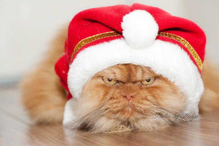 gatos con cosas en la cabeza