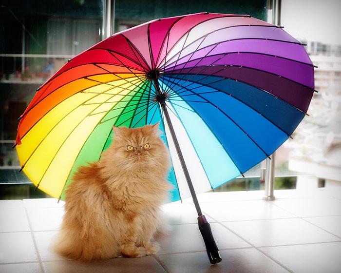 gato con sombrilla multicolor