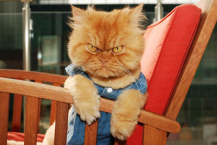 gato vestido de nene