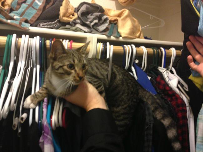 gato atrapado en perchas