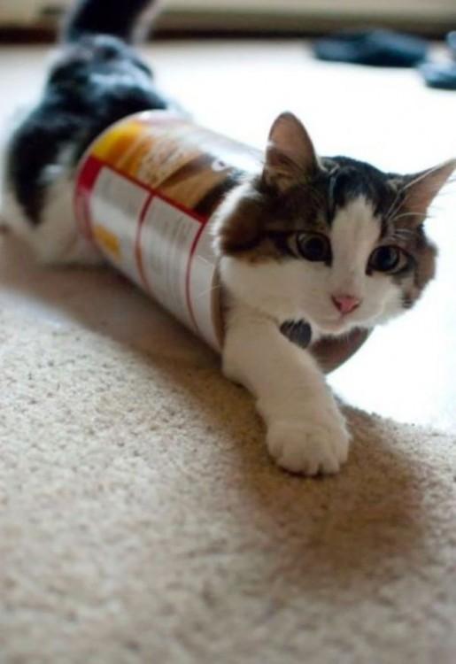gato atrapado en caja pringles