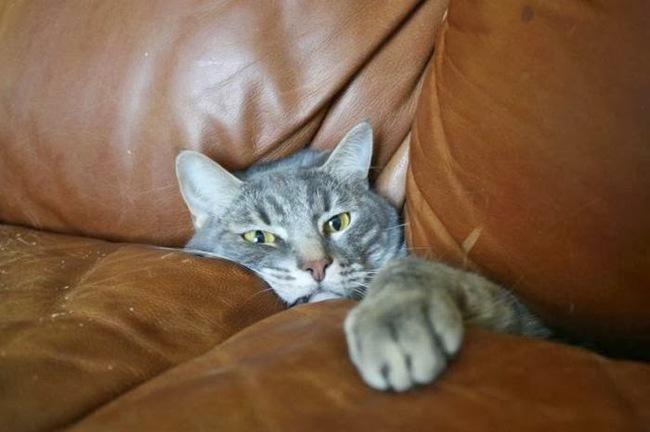 gato atrapado en sllon