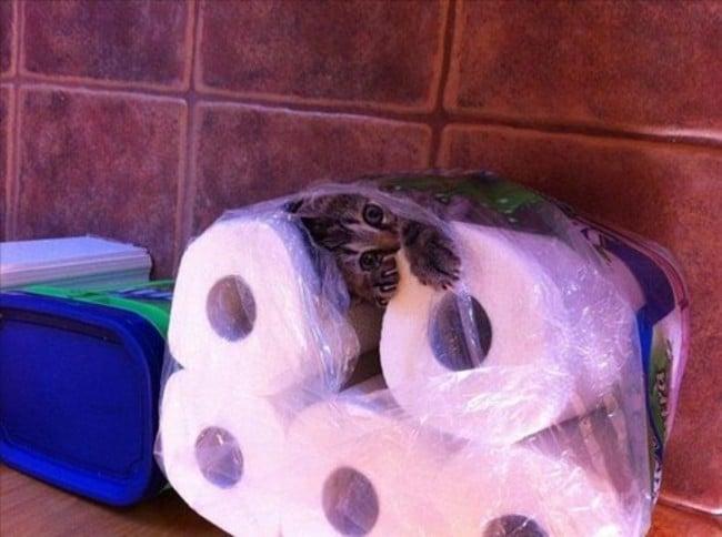 gato atrapado adentro de rollos de papel