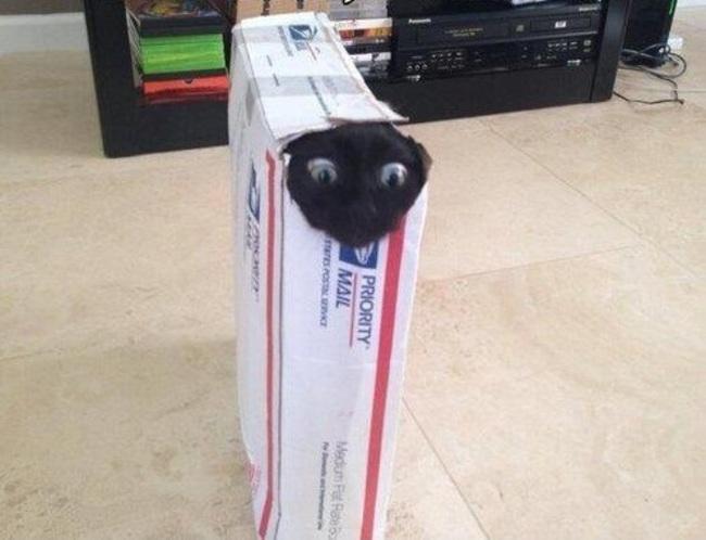 gato negro en una caja